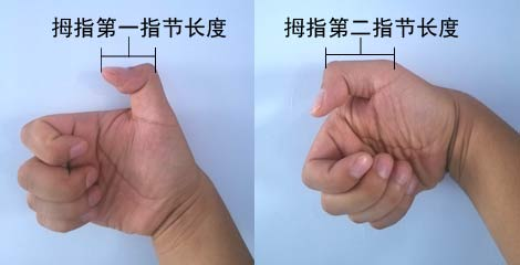 拇指第一指节和第二指节长度计算方式